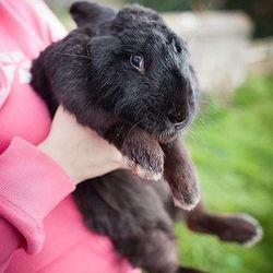 un lapin fait fuir un cambrioleur