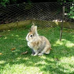 lapins nains abandonnés