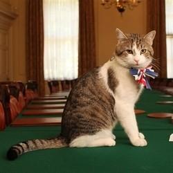 chat premier ministre britannique