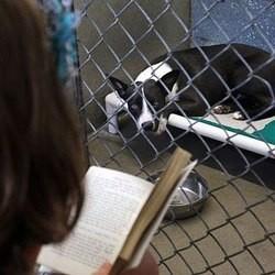 Des enfants font la lecture à des chiens et chats abandonnés