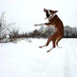 chiens neige races diaporama