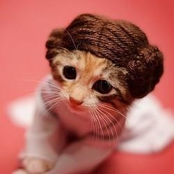 un chaton déguisé en princesse leila