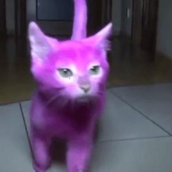 chaton elena lenina