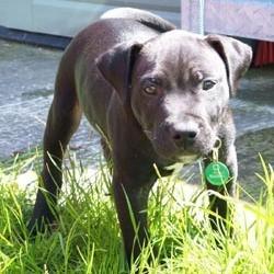 lennox chien dangereux euthanasie
