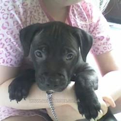 lennox chien euthanasie irlande