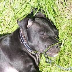 chien lennox euthanasie
