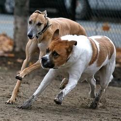 Si les animaux participaient aux Jeux Olympiques les humains seraient ratatinés