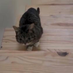 lil bub monte un escalier