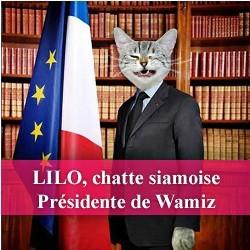 chat président wamiz