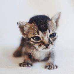 Lilu chaton orphelin