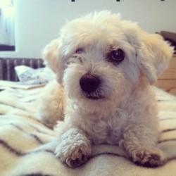 chien abandonné métamorphose