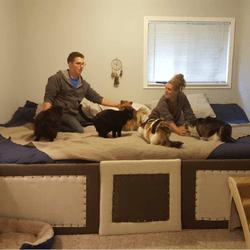 lit géant chiens et chats