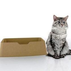 litière pour chat jetable ecolite