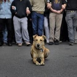 Loukanikos, chien manifestations Grèce