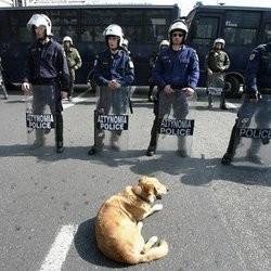 chien émeutes grèce loukanikos kanellos