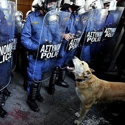 photo chien manifestantn grece loukanikos time