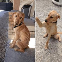 lucky chien affamé par ses propriétaires