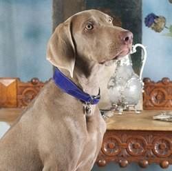 luxury hound marque luxe colliers chiens