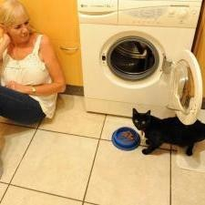 chat survit machine à laver