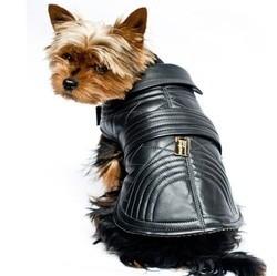 vêtement manteau chien haute couture