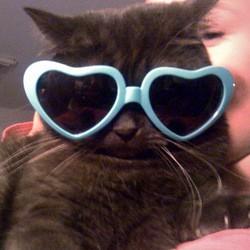 Chat mao déguisé lunettes