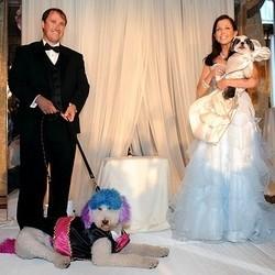 mariage chiens record monde