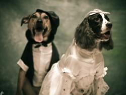 chiens mariage