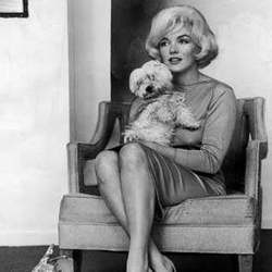 Marilyn Monroe chien maf livre