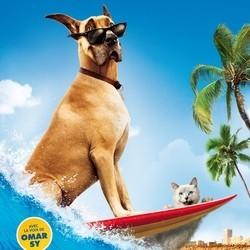 marmaduke film chien concours