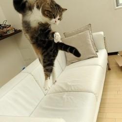 maru le chat jeux olympiques