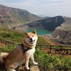 maru chien shiba inu