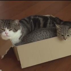 maru cartons