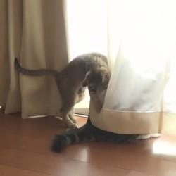 Hana joue avec la queue de Maru