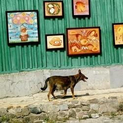chien ukraine euro 2012 massacre