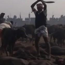 Massacre au Népal