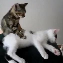 Chat qui masse un chat