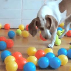 anniversaire chien balle