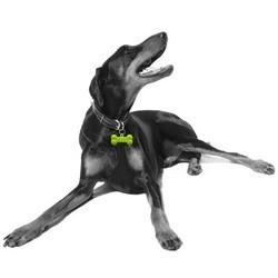 médaille parfumée pour chien