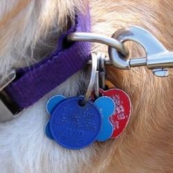 medaille pour chien medaille pour chat