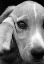michael jackson enfants sauvent chien