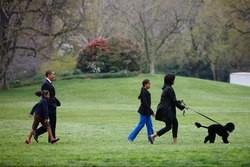 Michelle Obama Bo chien d'eau portugais