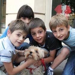 chien animaux de compagnie micro trottoir