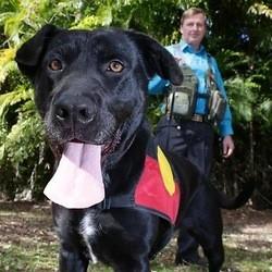chien archéologue flair odorat