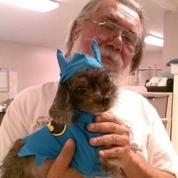 chien retrouvé 7 ans après sa disparition
