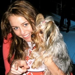 Miley Cyrus nouveau chien Feather Berger allemand