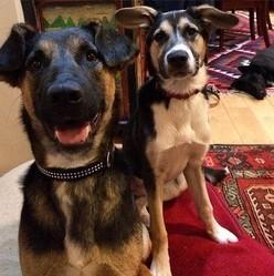 Gus Kenworthy et les chiens de sotchi qu'ila adoptés