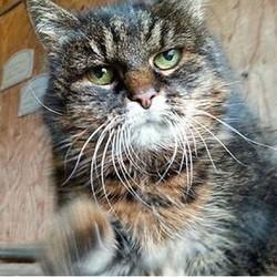 missan chat le plus vieux du monde