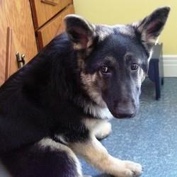 mister chien euthanasié usa