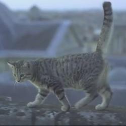 Mistigri chat film