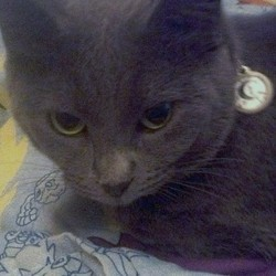 Miyu le chat